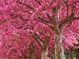Ağaç Orman